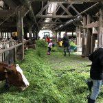 Kühe versorgen